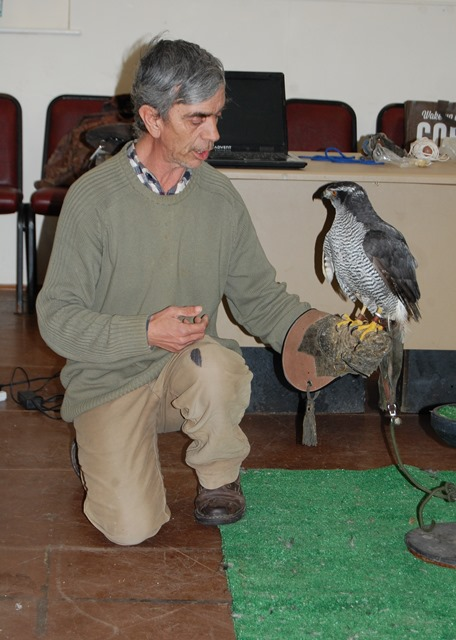 Steve with the Goshawk