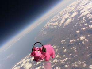 HAB PIG 12_31_51