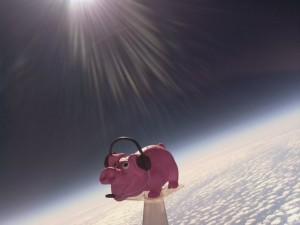 HAB PIG 12_33_51